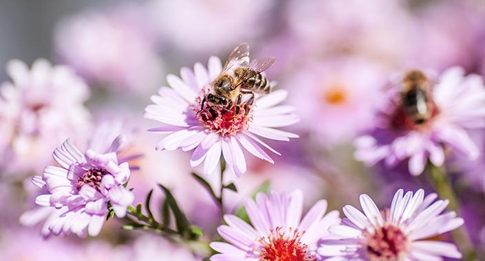 Biene sitzt auf einer Blume innerhalb einer Blumenwiese